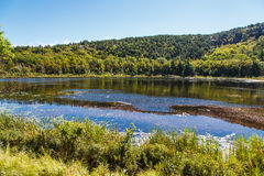 Beaver Pond in Maine Royalty Free Stock Photos