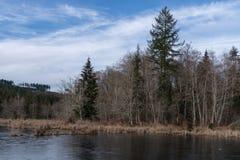 Beaver Pond. In Olympia Washington Stock Photos