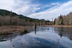 Beaver Pond. In Olympia Washington Stock Image