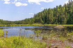 Beaver pond. A beaver ponf and beaver lodge in Algonquin Park, Canada Royalty Free Stock Photography