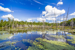 Beaver Pond with White Billowing Clouds Reflecting in the Water Stock Photo