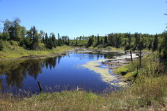 Beaver ponds formed Stock Photos