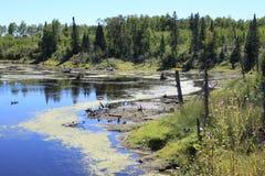 Beaver ponds formed Stock Images