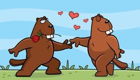 Beaver Romance Royalty Free Stock Image
