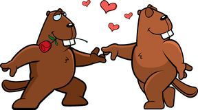 Beaver Romance Royalty Free Stock Images