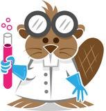 Beaver Scientist Royalty Free Stock Image