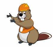 Beaver show (orange) Stock Photos