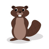 Beaver. Shy beaver standing on a white background Royalty Free Stock Images