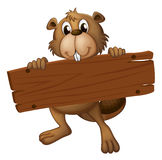 A beaver with a sign board Royalty Free Stock Images