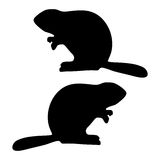 Beaver silhouette Stock Images