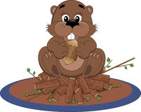 Beaver sitting on dam Royalty Free Stock Photos