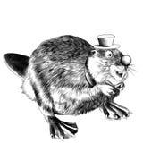 Beaver sketch vector Royalty Free Stock Photo