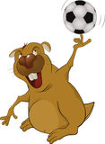 The beaver the soccer player Royalty Free Stock Image
