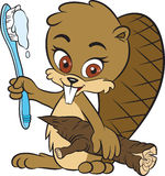 Beaver and toothbrush. Cute beaver with toothbrush looking at you vector illustration