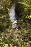 Beaver trail at edge of bog, Plymouth, New Hampshire. Royalty Free Stock Images