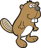 Beaver Vector Illustration Royalty Free Stock Photo