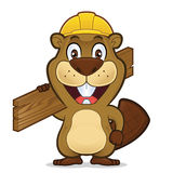 Beaver wearing a construction hat and holding a plank of wood Stock Photos