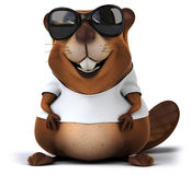 Beaver with a white tshirt Stock Images