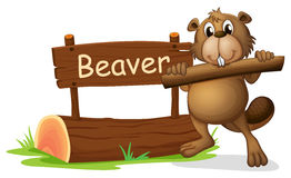 A beaver beside the wooden signboard Royalty Free Stock Photos