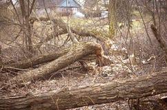 Beaver work stock images