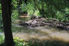 Beaver& x27;s lodge, beaver, beaver dam, dam Lauter  in Alsace, France Royalty Free Stock Image