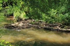 Beaver& x27;s lodge, beaver, beaver dam, dam Lauter  in Alsace, France Royalty Free Stock Photos