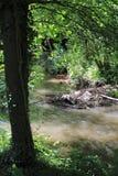 Beaver& x27;s lodge, beaver, beaver dam, dam Lauter  in Alsace, France Royalty Free Stock Images