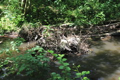 Beaver& x27;s lodge, beaver, beaver dam, dam Lauter  in Alsace, France Stock Photos