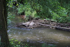 Beaver& x27;s lodge, beaver, beaver dam, dam Lauter  in Alsace, France Stock Photography