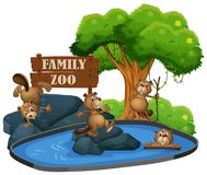 Beaver at the zoo. Illustration royalty free illustration