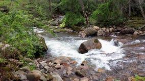 Beaverdam Creek. Near Backbone Rock in Tennessee Royalty Free Stock Photography