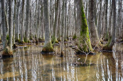 Beaverdam-Nebenfluss Tupelosumpf Stockbilder