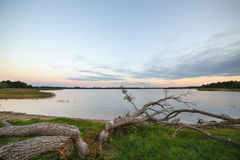 Beavers felled trees near the shore of the lake.  stock images