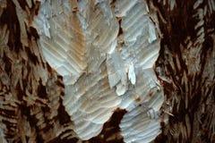 Beavers gnaw on wood take 2 Royalty Free Stock Images