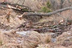 Beavers lake Stock Images