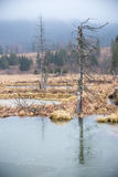 Beavers lake Stock Photo