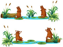 Beavers living by the pond Royalty Free Stock Images