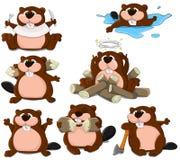 Beavers Royalty Free Stock Photo