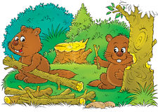 Beavers at work Royalty Free Stock Image