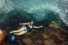Beaytiful Latina Diver Inside a school of fish Stock Image