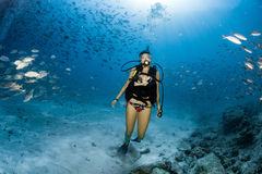 Beaytiful Latina Diver Inside a school of fish Royalty Free Stock Photography