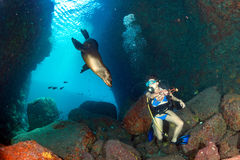 Beaytiful Latina Diver playing with sea lion underwater Stock Image