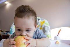 Bebé adorable que come la manzana primera comida para los bebés 10 meses niño pequeño que aprende vivir con la comida del sólido  imagen de archivo libre de regalías