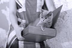 Bebé británico del shorthair Foto de archivo libre de regalías