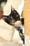 Bebé Cat Sitting en torre del juego en luz natural Imagenes de archivo