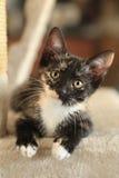 Bebé Cat Sitting en torre del juego en luz natural Foto de archivo libre de regalías