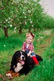 Bebé con el perro Berna en jardín de la primavera Imagen de archivo libre de regalías