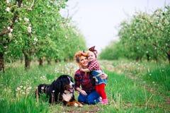 Bebé con el perro Berna en jardín de la primavera Fotografía de archivo libre de regalías