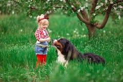 Bebé con el perro Berna en jardín de la primavera Foto de archivo