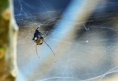 bebé de la araña Foto de archivo
